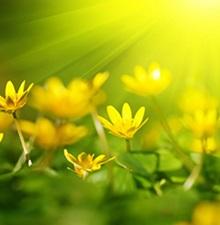 Sunce-1